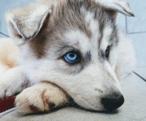 Accueil chiens 20180608_165940