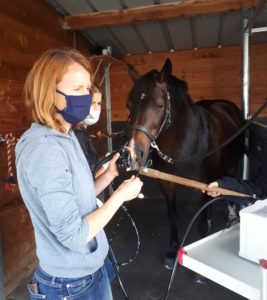 H2B endoscopie chevaux